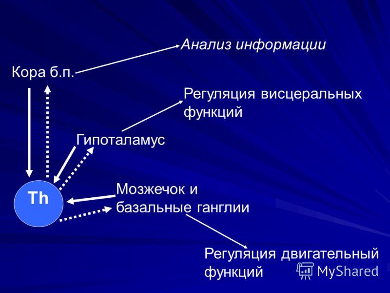 Th Кора б.п. Гипоталамус Мозжечок и базальные ганглии Анализ информации Регуляция висцеральных функций Регуляция двигательный функций