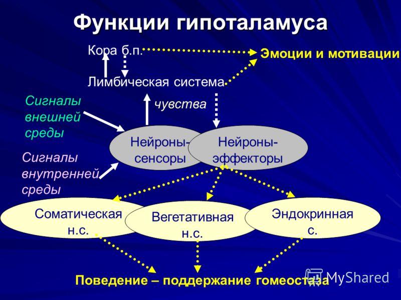 Система Лимбическая