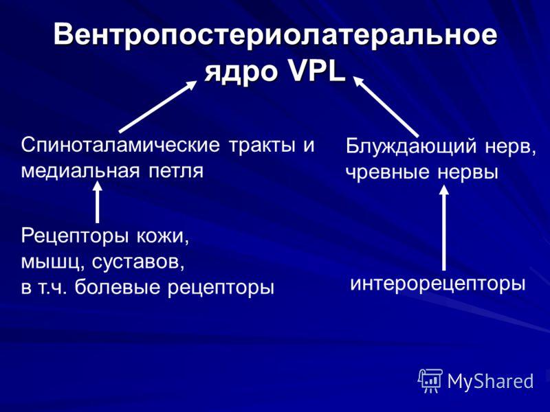 Вентропостериолатеральное ядро VPL Спиноталамические тракты и медиальная петля Рецепторы кожи, мышц, суставов, в т.ч. болевые рецепторы Блуждающий нерв, чревные нервы интерорецепторы