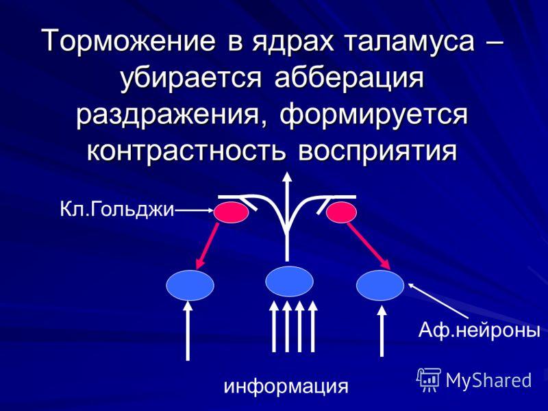 Торможение в ядрах таламуса – убирается абберация раздражения, формируется контрастность восприятия информация Кл.Гольджи Аф.нейроны
