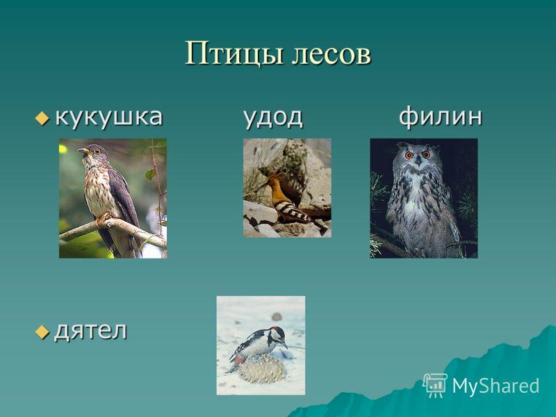 Птицы лесов кукушка удод филин кукушка удод филин дятел дятел