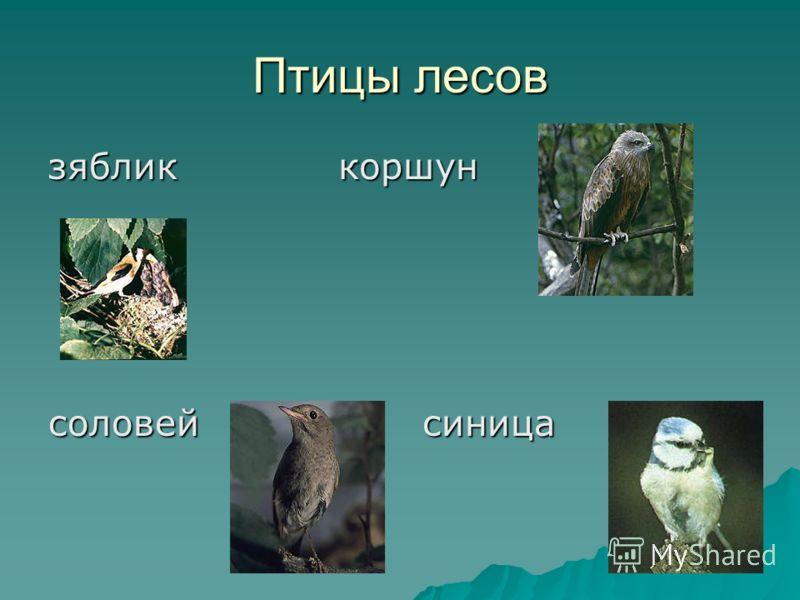 Птицы лесов зяблик коршун соловей синица