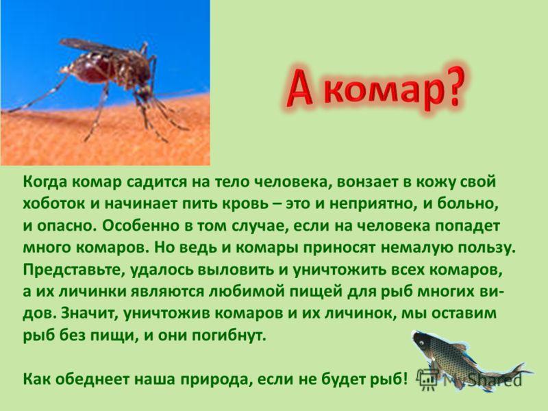 Когда комар садится на тело человека, вонзает в кожу свой хоботок и начинает пить кровь – это и неприятно, и больно, и опасно. Особенно в том случае, если на человека попадет много комаров. Но ведь и комары приносят немалую пользу. Представьте, удало