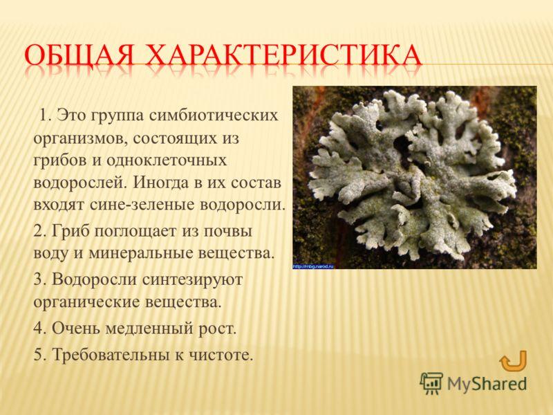 1. Это группа симбиотических организмов, состоящих из грибов и одноклеточных водорослей. Иногда в их состав входят сине-зеленые водоросли. 2. Гриб поглощает из почвы воду и минеральные вещества. 3. Водоросли синтезируют органические вещества. 4. Очен