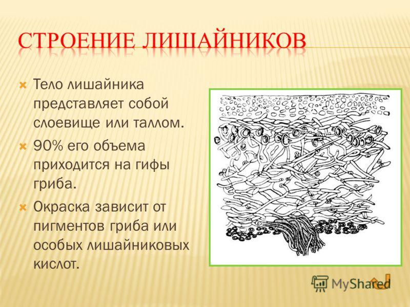 Тело лишайника представляет собой слоевище или таллом. 90% его объема приходится на гифы гриба. Окраска зависит от пигментов гриба или особых лишайниковых кислот.