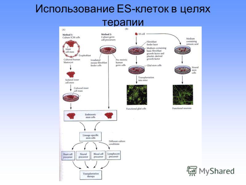 Использование ES-клеток в целях терапии