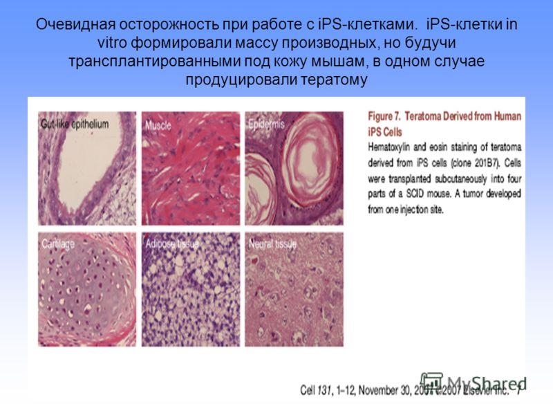 Очевидная осторожность при работе с iPS-клетками. iPS-клетки in vitro формировали массу производных, но будучи трансплантированными под кожу мышам, в одном случае продуцировали тератому