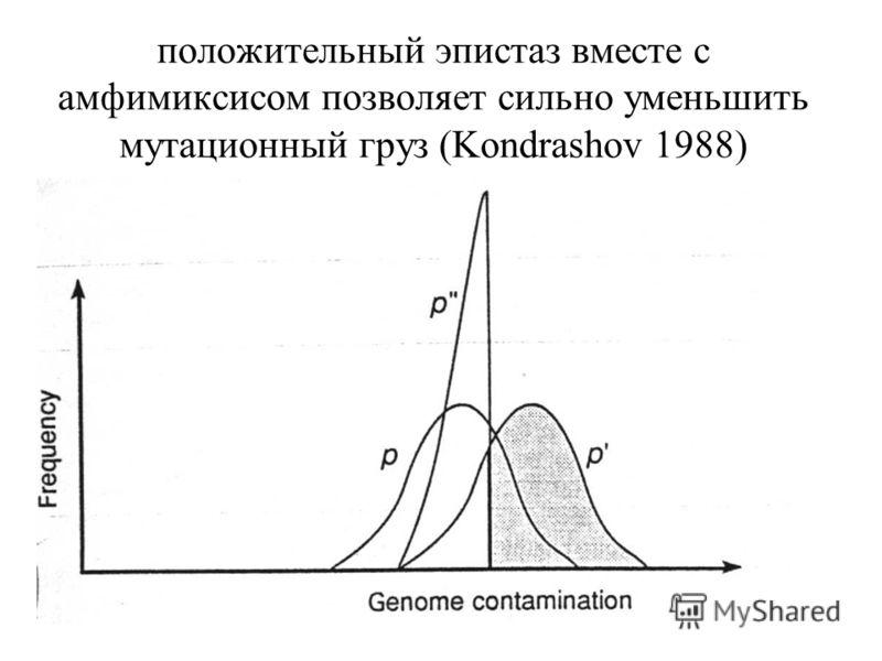 положительный эпистаз вместе с амфимиксисом позволяет сильно уменьшить мутационный груз (Kondrashov 1988)