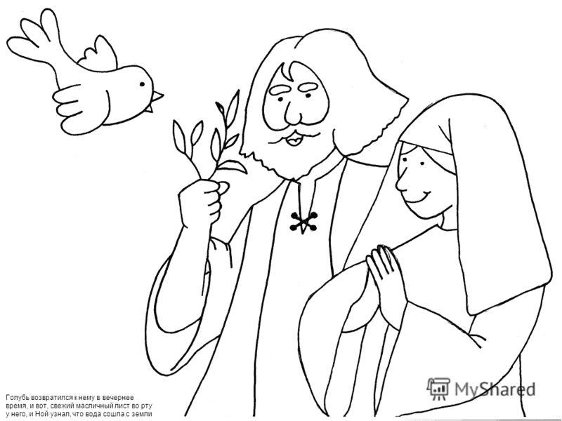 Голубь возвратился к нему в вечернее время, и вот, свежий масличный лист во рту у него, и Ной узнал, что вода сошла с земли