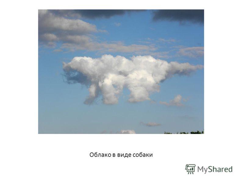 Облако в виде собаки