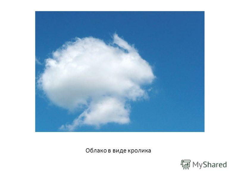 Облако в виде кролика