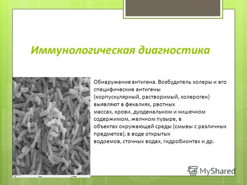 Иммунологическая диагностика Обнаружение антигена. Возбудитель холеры и его специфические антигены (корпускулярный, растворимый, холероген) выявляют в фекалиях, рвотных массах, крови, дуоденальном и кишечном содержимом, желчном пузыре, в объектах окр
