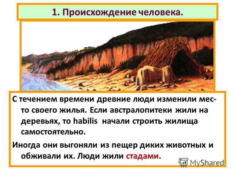 1. Происхождение человека. С течением времени древние люди изменили мес- то своего жилья. Если австралопитеки жили на деревьях, то habilis начали строить жилища самостоятельно. Иногда они выгоняли из пещер диких животных и обживали их. Люди жили стад
