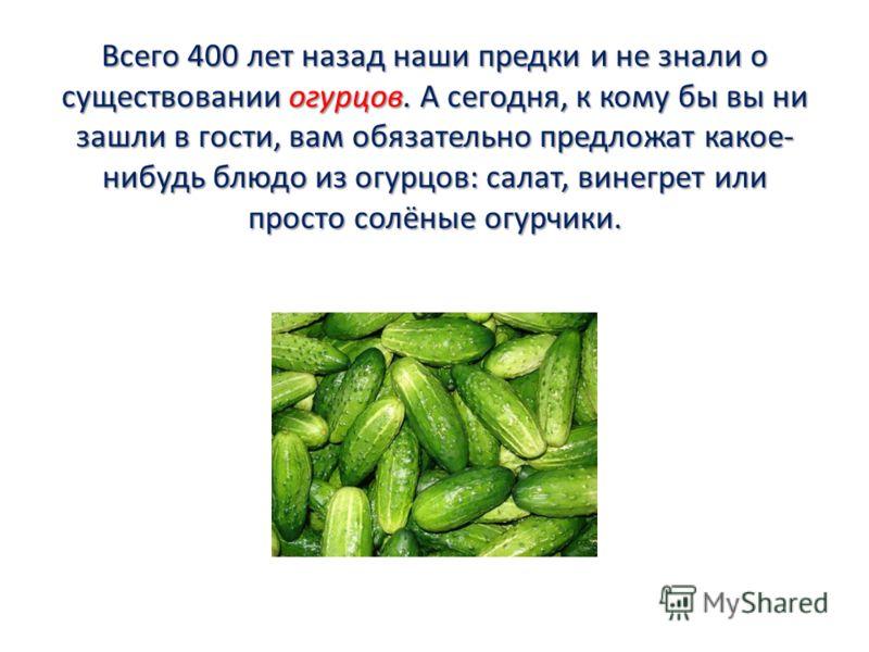 Всего 400 лет назад наши предки и не знали о существовании огурцов. А сегодня, к кому бы вы ни зашли в гости, вам обязательно предложат какое- нибудь блюдо из огурцов: салат, винегрет или просто солёные огурчики.