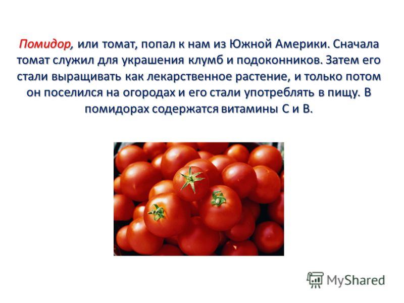 Помидор, или томат, попал к нам из Южной Америки. Сначала томат служил для украшения клумб и подоконников. Затем его стали выращивать как лекарственное растение, и только потом он поселился на огородах и его стали употреблять в пищу. В помидорах соде