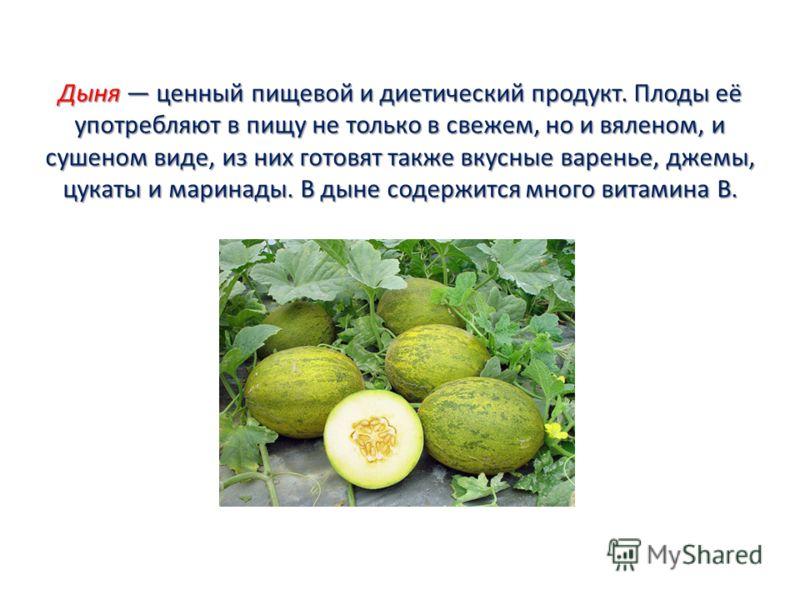 Дыня ценный пищевой и диетический продукт. Плоды её употребляют в пищу не только в свежем, но и вяленом, и сушеном виде, из них готовят также вкусные варенье, джемы, цукаты и маринады. В дыне содержится много витамина В.