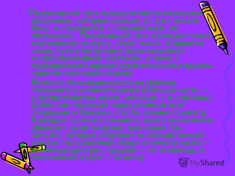 Пирамидный путь Кора полушарий головного мозга в V слое содержит клетки Беца (или гигантские пирамидные клетки). В 1874 г. ученый Владимир Алексеевич Бец обнаружил и описал гигантские пирамидальные клетки коры головного мозга (клетки Беца). Корково-с