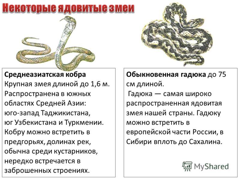 Среднеазиатская кобра Крупная змея длиной до 1,6 м. Распространена в южных областях Средней Азии: юго-запад Таджикистана, юг Узбекистана и Туркмении. Кобру можно встретить в предгорьях, долинах рек, обычна среди кустарников, нередко встречается в заб