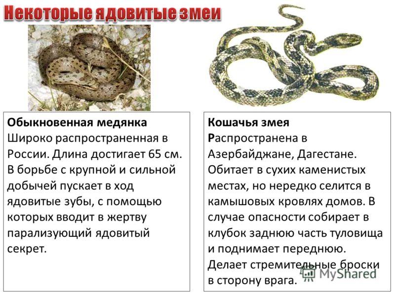 Обыкновенная медянка Широко распространенная в России. Длина достигает 65 см. В борьбе с крупной и сильной добычей пускает в ход ядовитые зубы, с помощью которых вводит в жертву парализующий ядовитый секрет. Кошачья змея Распространена в Азербайджане