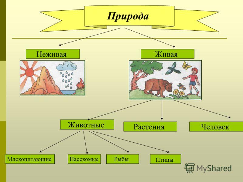 Природа Человек Птицы Животные Растения МлекопитающиеНасекомыеРыбы НеживаяЖивая