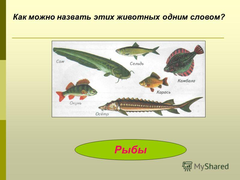Как можно назвать этих животных одним словом? Рыбы