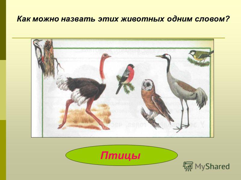 Как можно назвать этих животных одним словом? Птицы