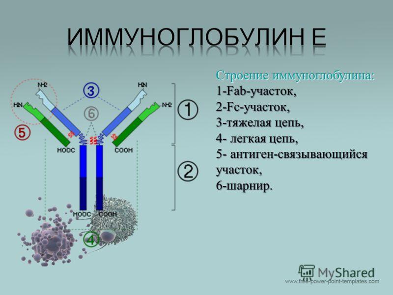 Почему повышается иммуноглобулин е