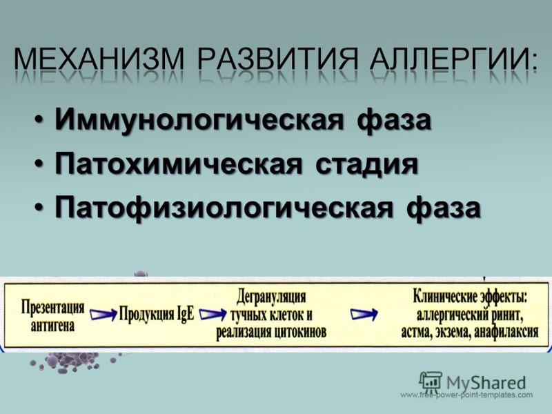 Иммунологическая фазаИммунологическая фаза Патохимическая стадияПатохимическая стадия Патофизиологическая фазаПатофизиологическая фаза
