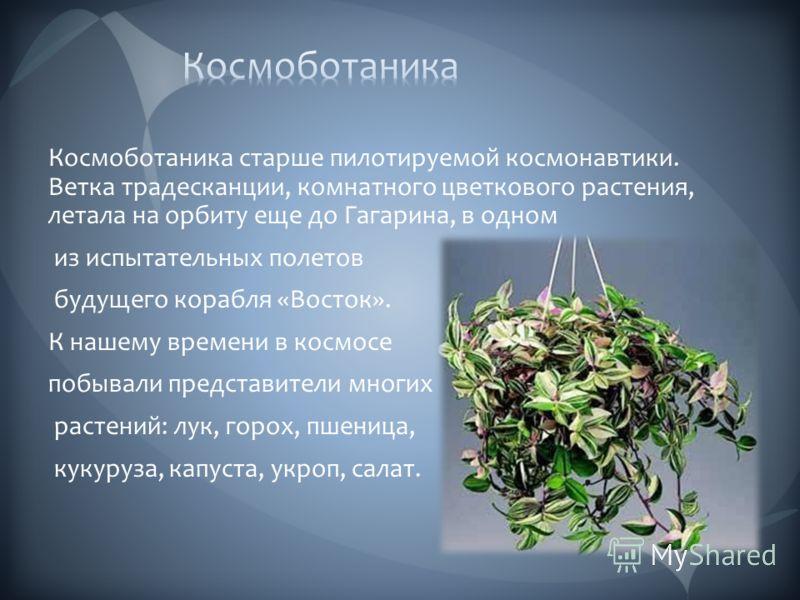 Космоботаника старше пилотируемой космонавтики. Ветка традесканции, комнатного цветкового растения, летала на орбиту еще до Гагарина, в одном из испытательных полетов будущего корабля «Восток». К нашему времени в космосе побывали представители многих