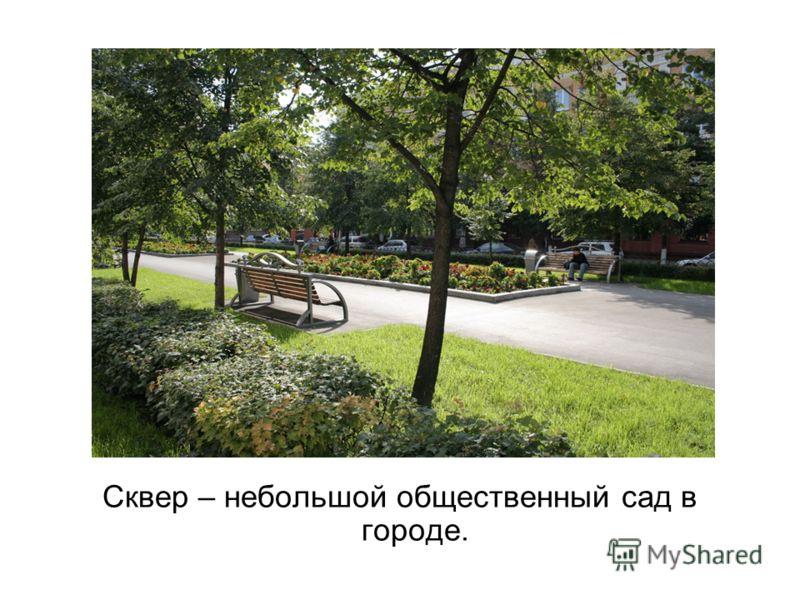 Сквер – небольшой общественный сад в городе.
