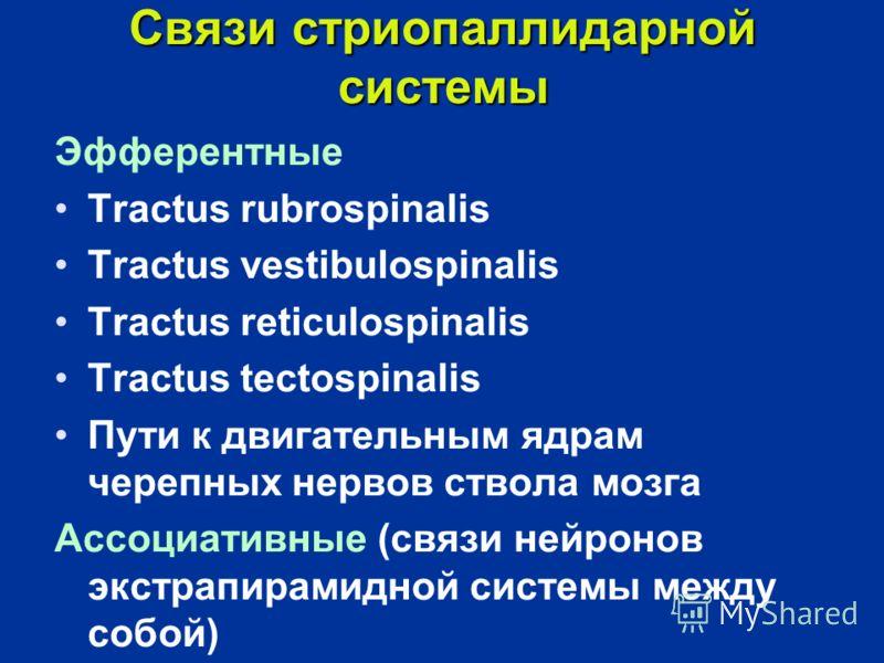 Связи стриопаллидарной системы Эфферентные Tractus rubrospinalis Tractus vestibulospinalis Tractus reticulospinalis Tractus tectospinalis Пути к двигательным ядрам черепных нервов ствола мозга Ассоциативные (связи нейронов экстрапирамидной системы ме