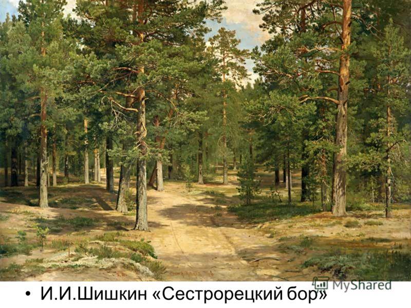 И.И.Шишкин «Сестрорецкий бор»