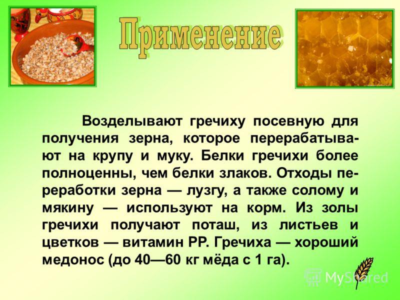 Возделывают гречиху посевную для получения зерна, которое перерабатыва- ют на крупу и муку. Белки гречихи более полноценны, чем белки злаков. Отходы пе- реработки зерна лузгу, а также солому и мякину используют на корм. Из золы гречихи получают поташ