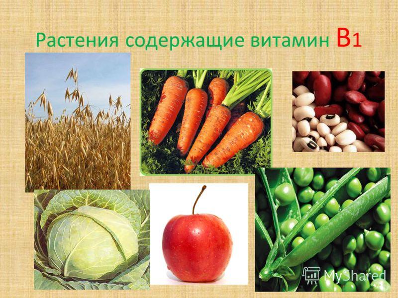Растения содержащие витамин В 1