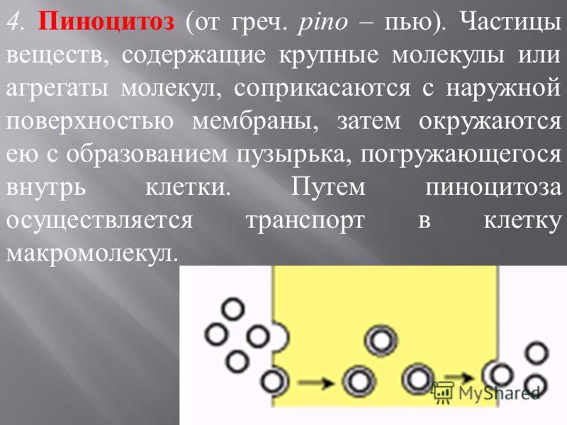 4. Пиноцитоз (от греч. pino – пью). Частицы веществ, содержащие крупные молекулы или агрегаты молекул, соприкасаются с наружной поверхностью мембраны, затем окружаются ею с образованием пузырька, погружающегося внутрь клетки. Путем пиноцитоза осущест
