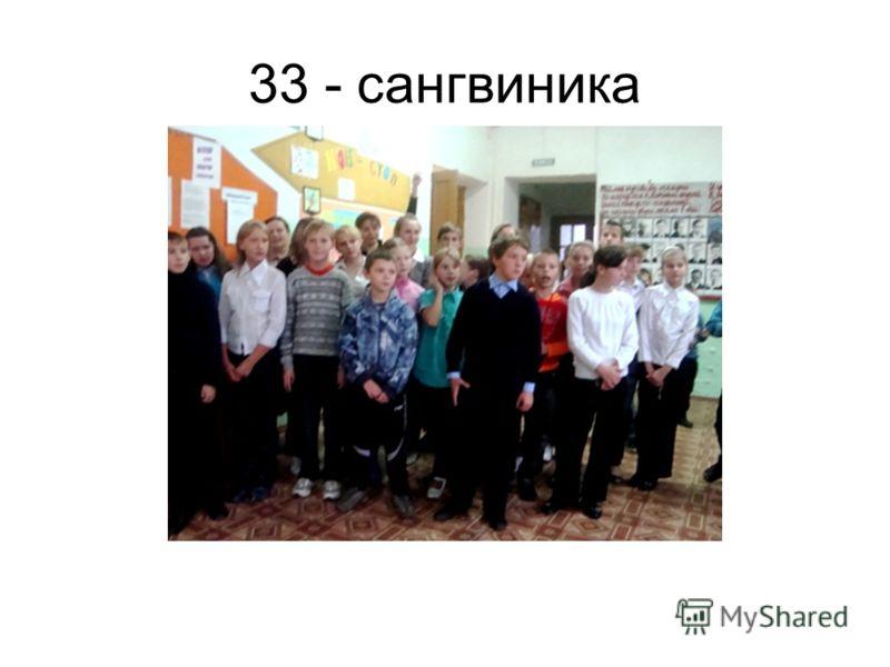 33 - сангвиника