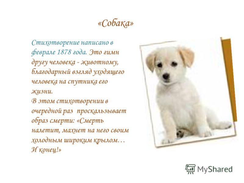 «Собака» Стихотворение написано в феврале 1878 года. Это гимн другу человека - животному, благодарный взгляд уходящего человека на спутника его жизни. В этом стихотворении в очередной раз проскальзывает образ смерти: «Смерть налетит, махнет на него с