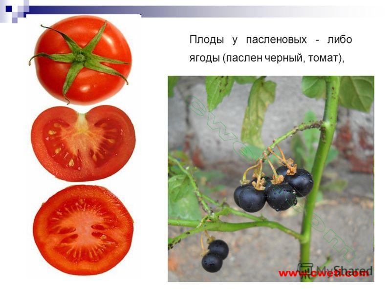 Плоды у пасленовых - либо ягоды (паслен черный, томат),