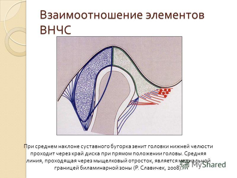 Взаимоотношение элементов ВНЧС При среднем наклоне суставного бугорка зенит головки нижней челюсти проходит через край диска при прямом положении головы. Средняя линия, проходящая через мыщелковый отросток, является медиальной границей биламинарной з