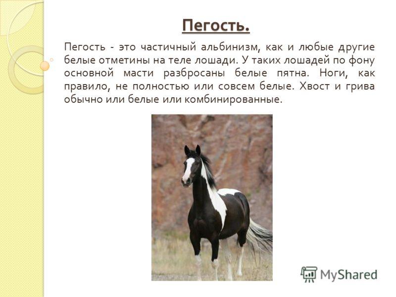 Пегость. Пегость - это частичный альбинизм, как и любые другие белые отметины на теле лошади. У таких лошадей по фону основной масти разбросаны белые пятна. Ноги, как правило, не полностью или совсем белые. Хвост и грива обычно или белые или комбинир