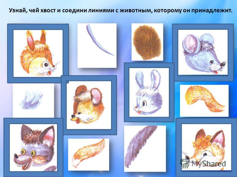 Узнай, чей хвост и соедини линиями с животным, которому он принадлежит.