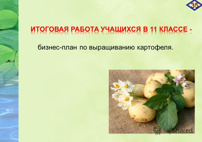 бизнес-план по выращиванию картофеля. 35