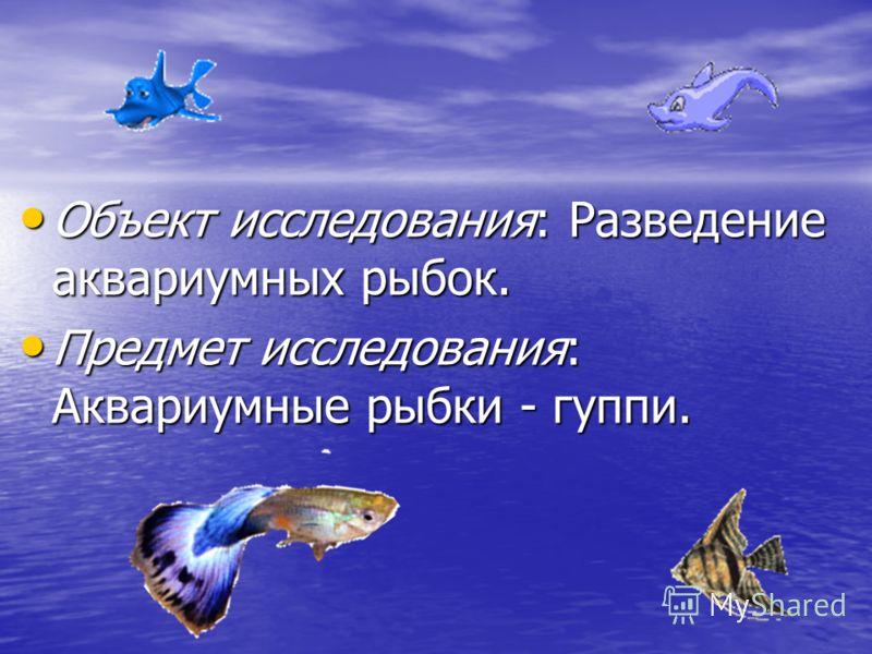 Объект исследования: Разведение аквариумных рыбок. Объект исследования: Разведение аквариумных рыбок. Предмет исследования: Аквариумные рыбки - гуппи. Предмет исследования: Аквариумные рыбки - гуппи.