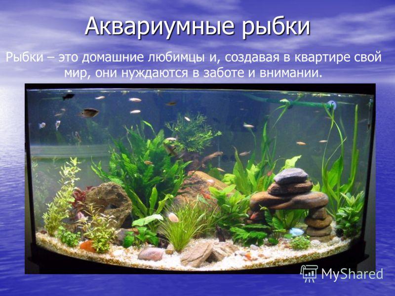 Аквариумные рыбки Рыбки – это домашние любимцы и, создавая в квартире свой мир, они нуждаются в заботе и внимании.