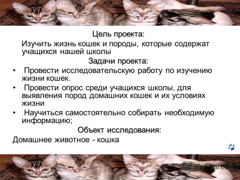 Цель проекта: Изучить жизнь кошек и породы, которые содержат учащихся нашей школы Задачи проекта: Провести исследовательскую работу по изучению жизни кошек. Провести опрос среди учащихся школы, для выявления пород домашних кошек и их условиях жизни Н