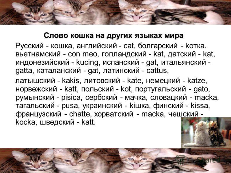 Слово кошка на других языках мира Русский - кошка, английский - cat, болгарский - kотка. вьетнамский - con meo, голландский - kat, датский - kat, индонезийский - kucing, испанский - gat, итальянский - gatta, каталанский - gat, латинский - cattus, лат