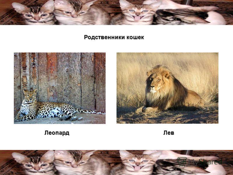ЛеопардЛев