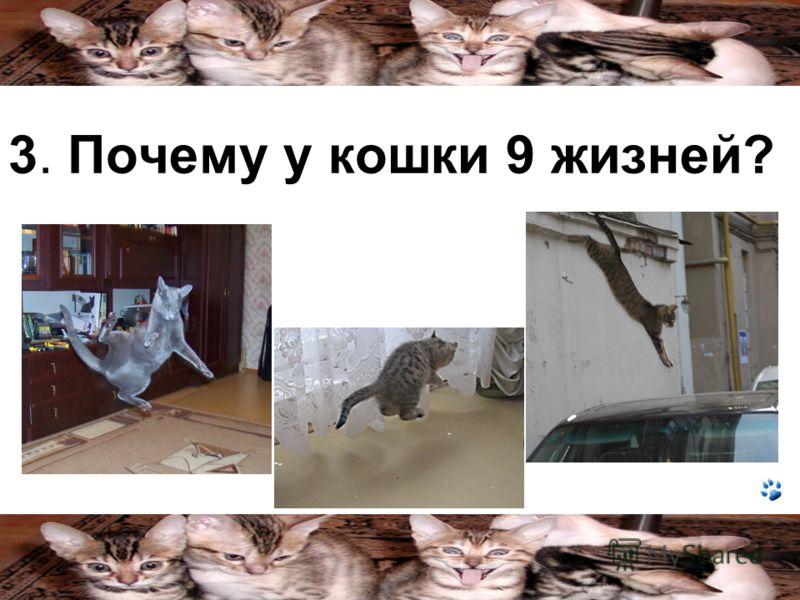 3. Почему у кошки 9 жизней?