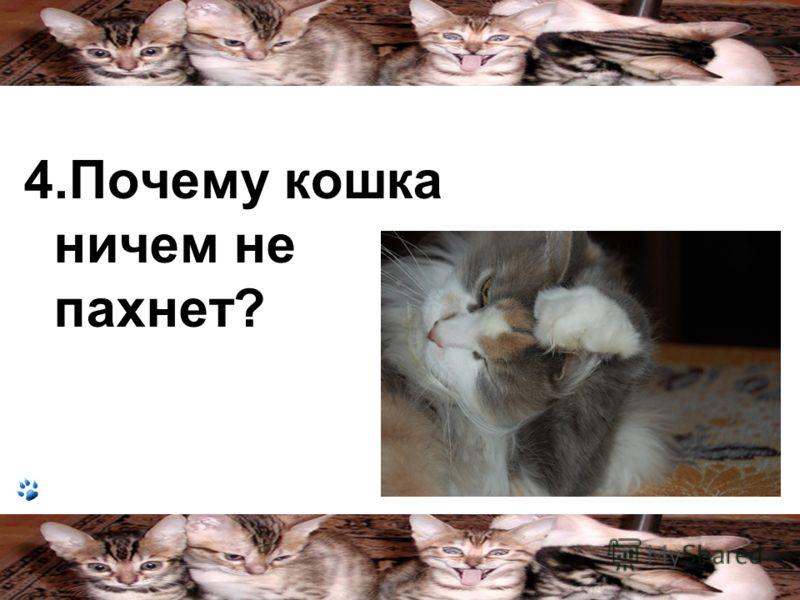 4.Почему кошка ничем не пахнет?