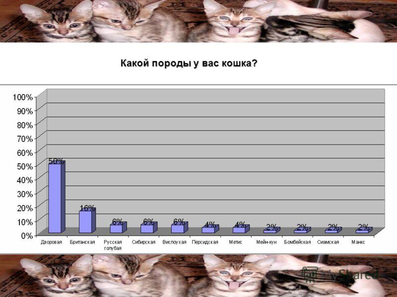 Какой породы у вас кошка?